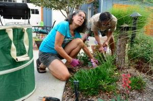 BOULDER, CO - SEPTEMBER 2: Lindy Cook and Alan O'Hashi pull weeds from the garden of the community with other residents September 2, 2015 at Silver Sage Village. The active adult cohousing community for those 55 or older is setup like a usual condo community with every person having their own place, but the sense of community is what is unique. (Photo By Brent Lewis/The Denver Post)