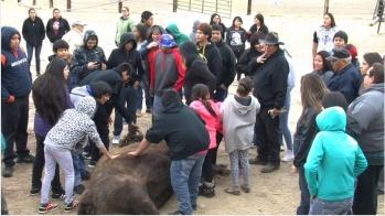 kids bison
